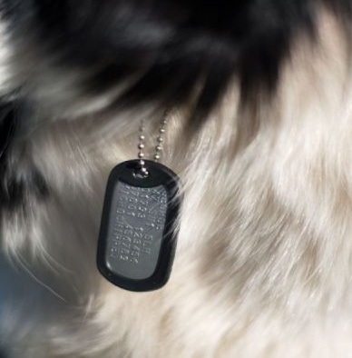 pet tag for dogs